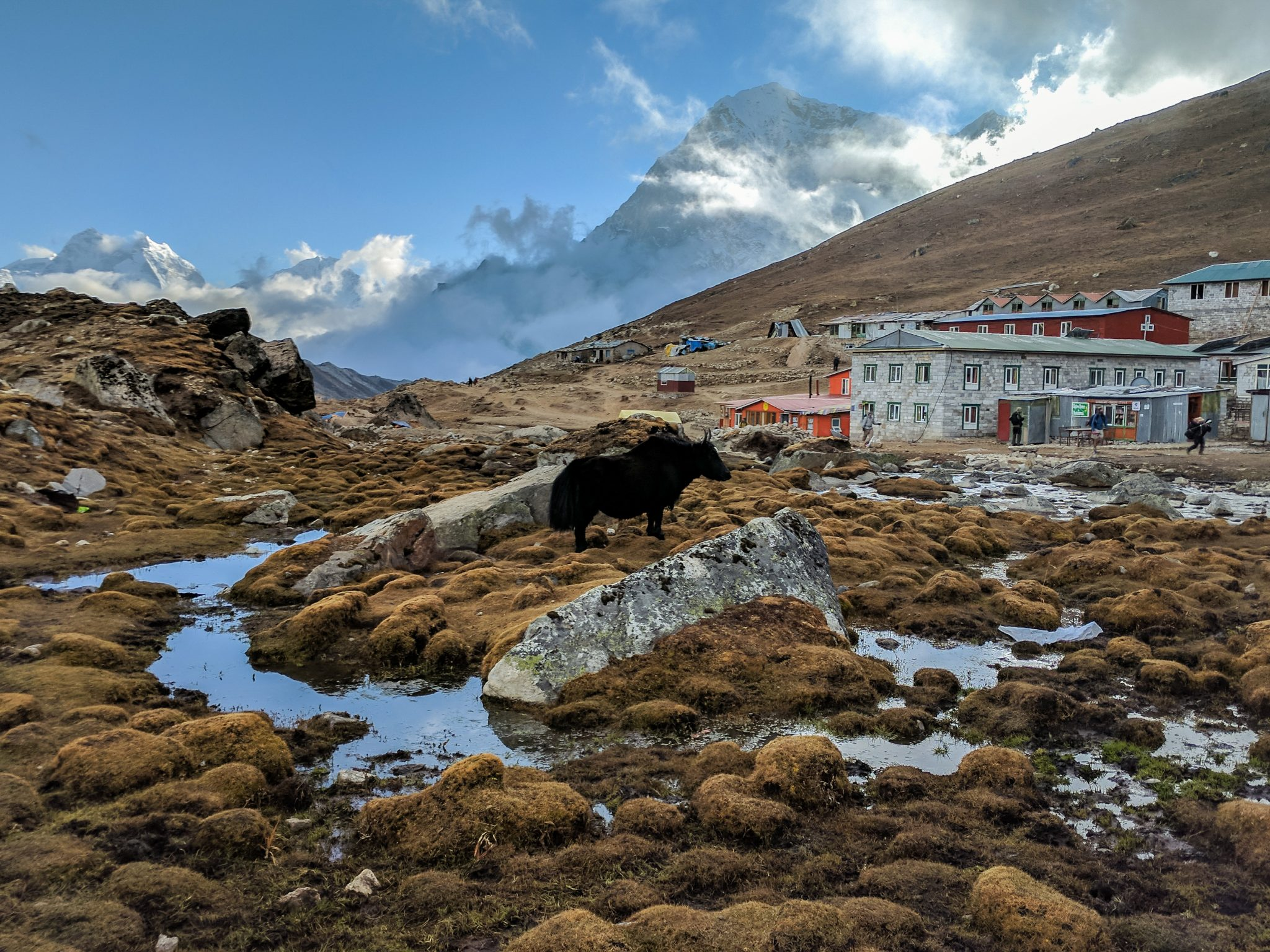 Everest Trek Yak