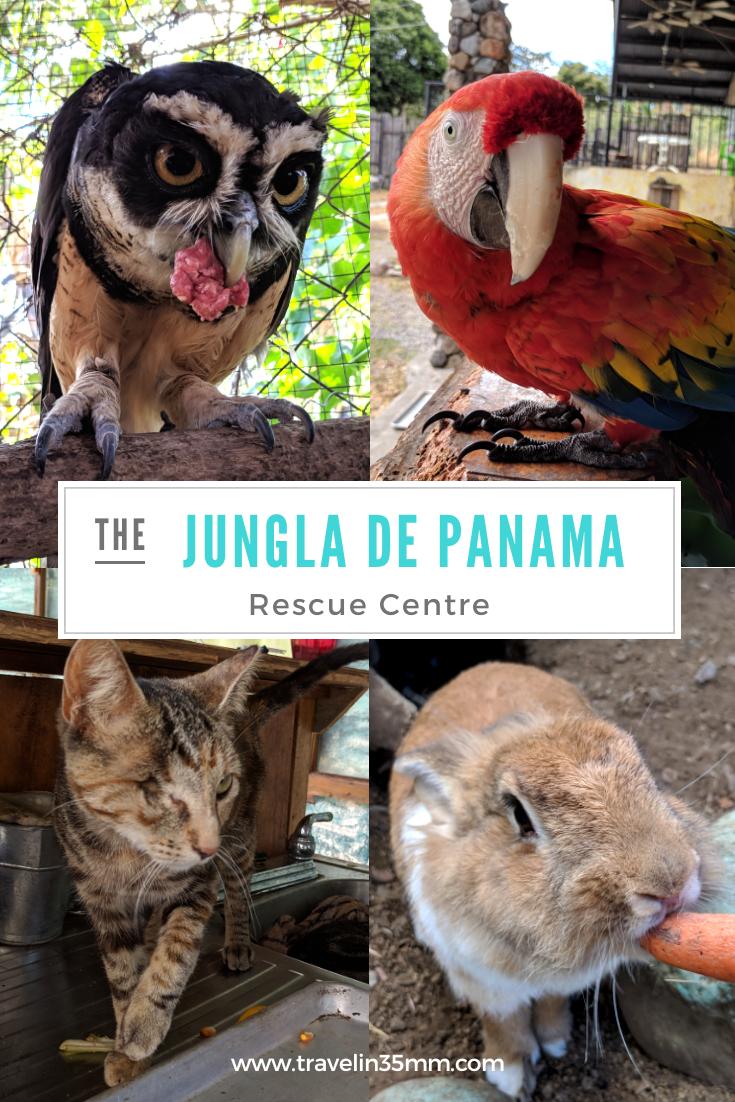 Jungla de Panama Rescue Centre