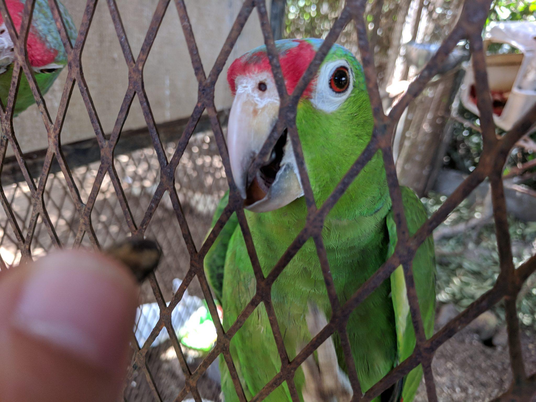 Feeding some parakeets
