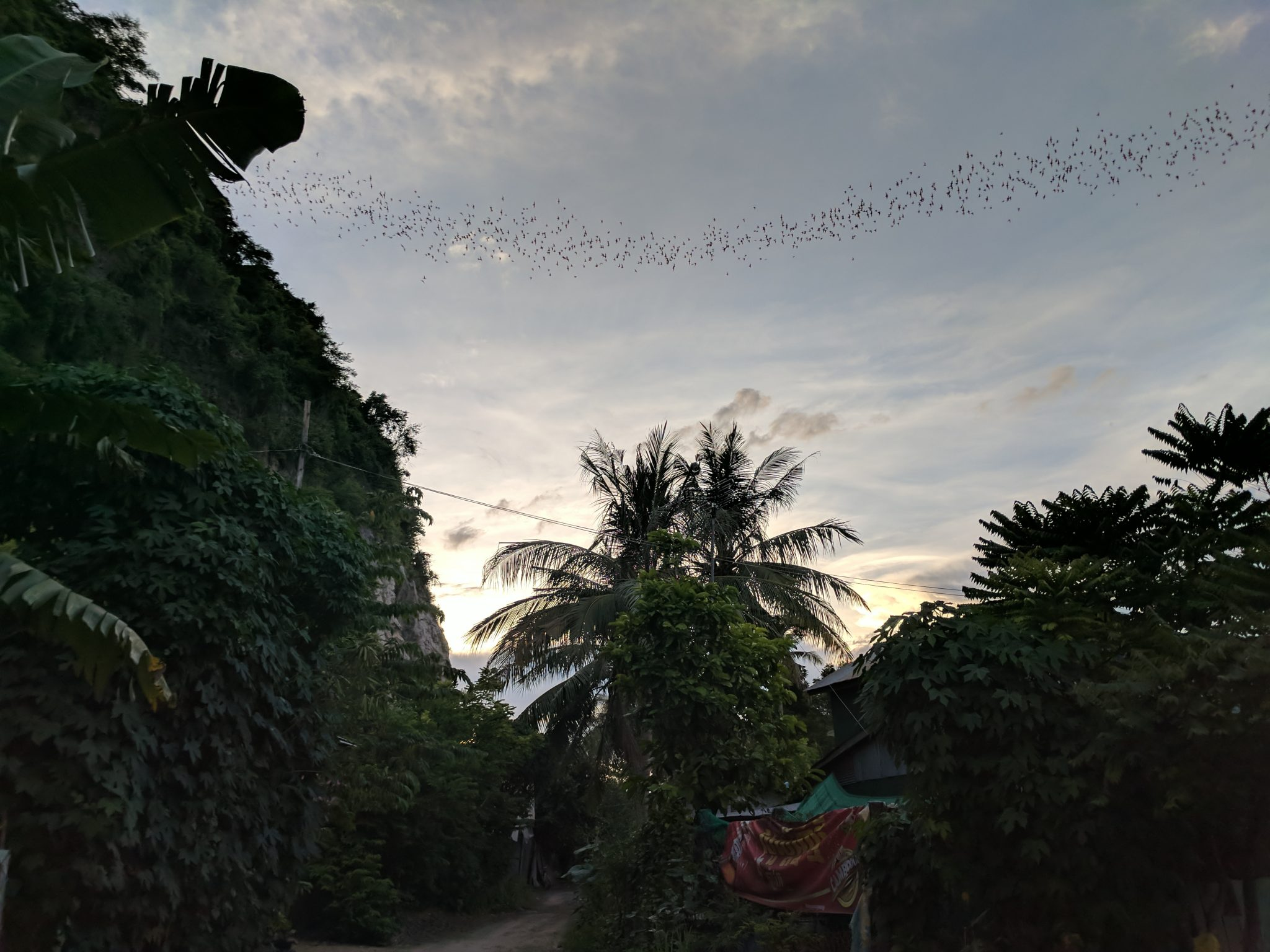 Bats near Battambang