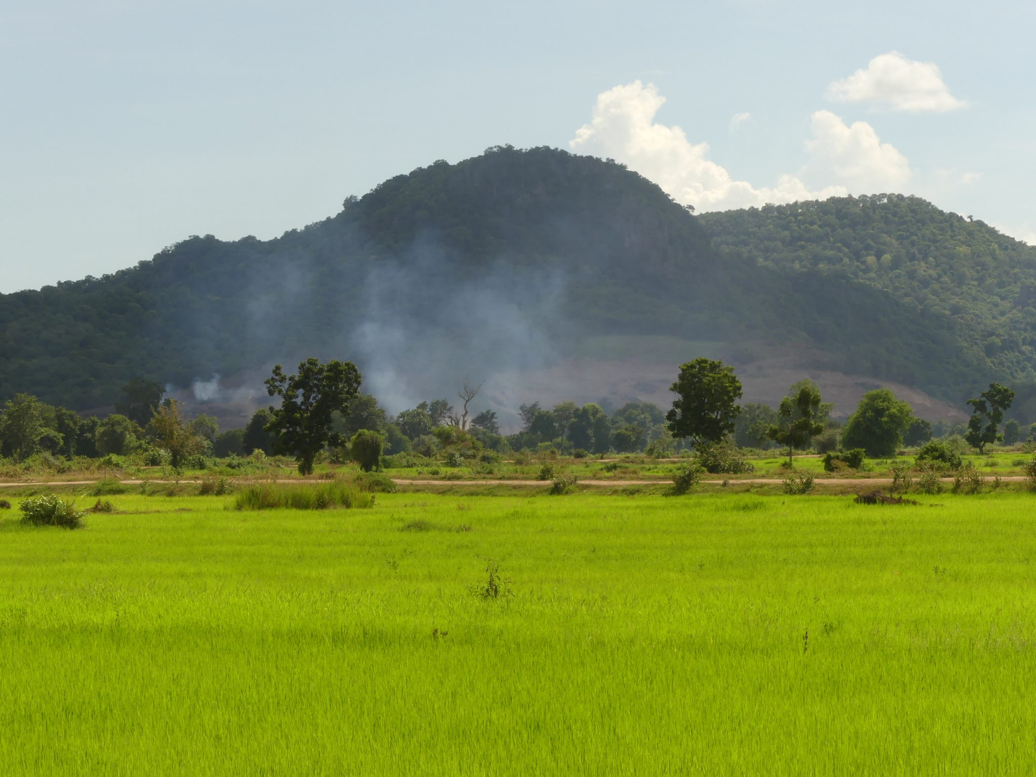 Rice paddies in Battambang